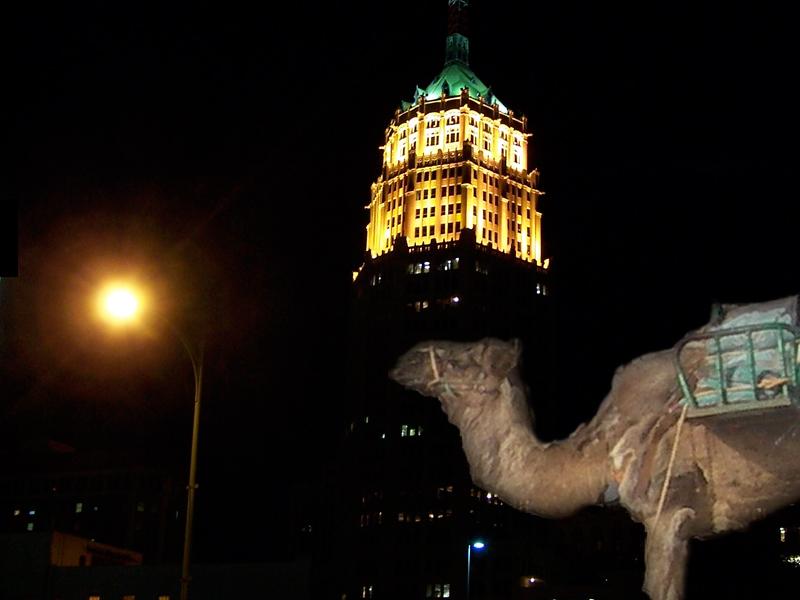 Camel Werbung Im Bild Kamele in der Stadt